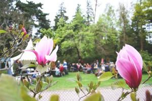 magnolia_front